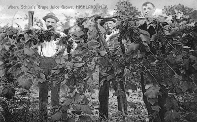 The John Schuhle family: Where Schuhle's Grape Juice Grows, Highland, N.Y.